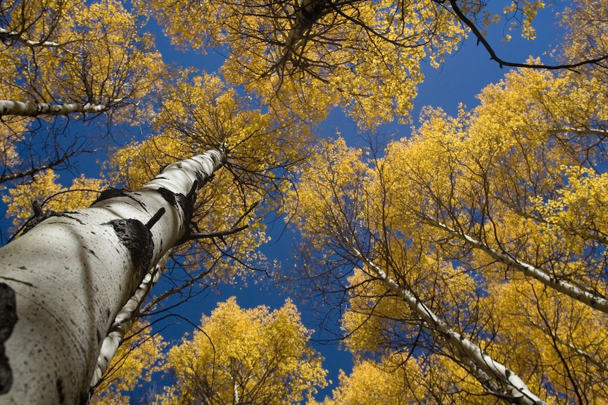 Estes Park Colorado Trees Fall 2016